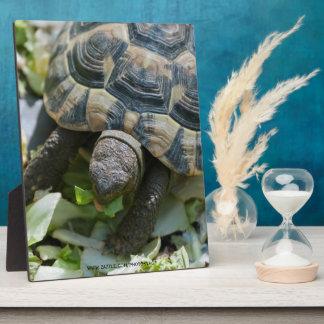 Cute Turtle Plaque