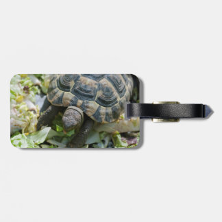 Cute Turtle Tag For Luggage