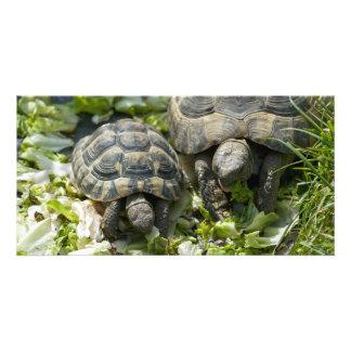 Cute Turtles Card