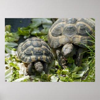Cute Turtles Poster