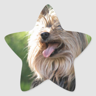 Cute Very Hairy Doggy- Yorkshire Terrier Star Sticker