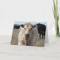 Cute Veterinarian Congratulations Ranch Farm DVM Card