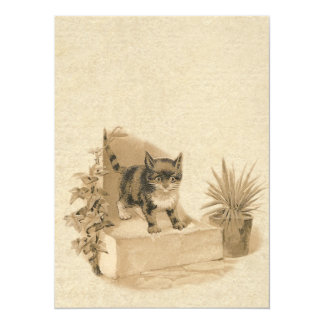 Cute Vintage Cat Drawing Antique French Card