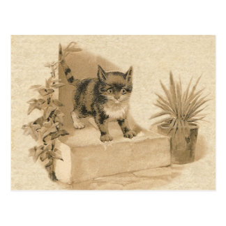 Cute Vintage Cat Drawing Antique French Card Postcard