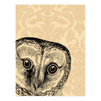 Cute Vintage Owl in Black on Tan Damask Postcard