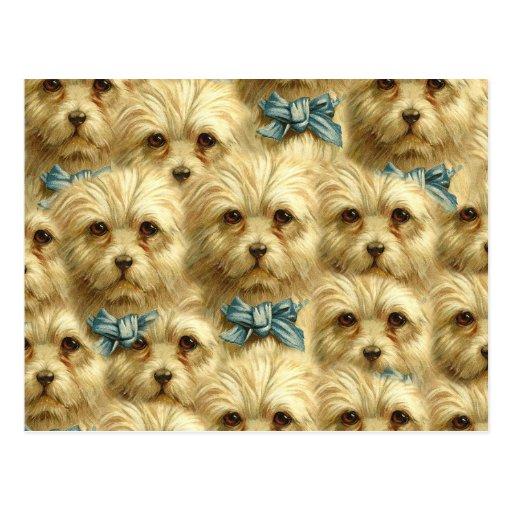 Cute Vintage Pedigree Dog Terrier Portrait Collage Post Card