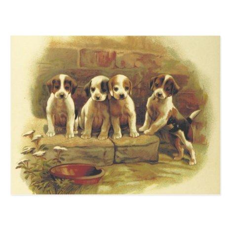 Puppies Postcard