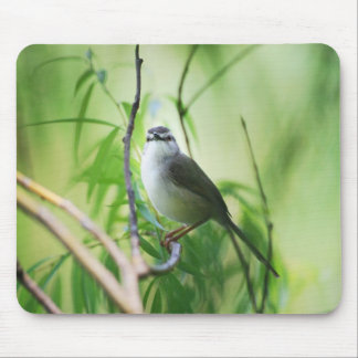 Cute Wagtail Bird Mouse Pad