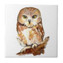 Cute Watercolor Saw Whet Owl, Bird, Animal Tile