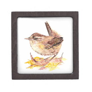 Cute Watercolor Wren Bird, Nature, Wildlife Gift Box