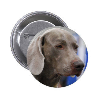Cute Weimaraner  Button