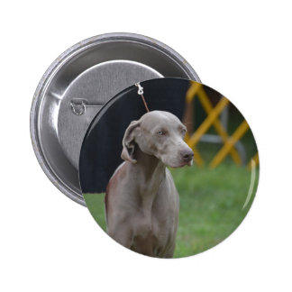 Cute Weimaraner Dog Pinback Buttons