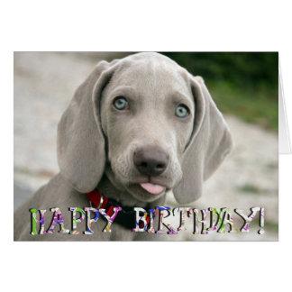 Cute weimaraner puppy birthday card