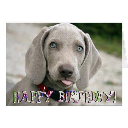 Cute weimaraner puppy birthday card – Weimaraner Birthday Cards