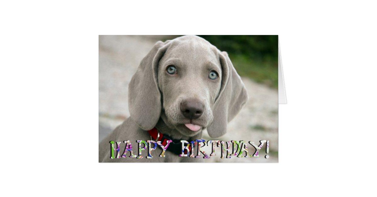 Cute weimaraner puppy birthday card | Zazzle