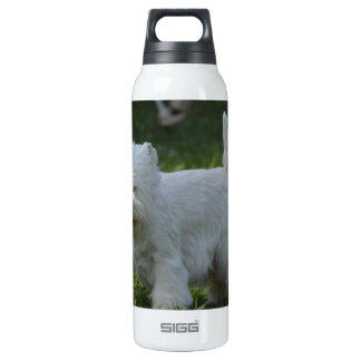 Cute West Highland Terrier SIGG Thermo 0.5L Insulated Bottle