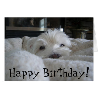 Cute Westie Face Photo Greeting Card