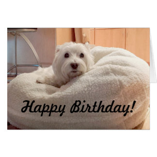 Cute Westie in Doggie Bed Happy Birthday Card