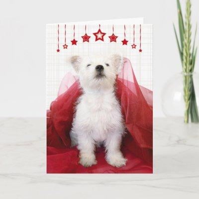 Westie boston terrier mix - Imperial westies ...