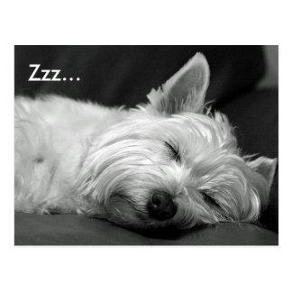 Cute Westie (West Highland Terrier) Dog Postcard