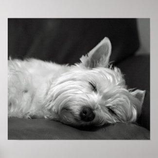 Cute Westie (West Highland Terrier) Dog print