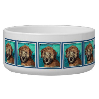 Cute Wheaten Terrier Puppy Dog with Wet Face Dog Food Bowl