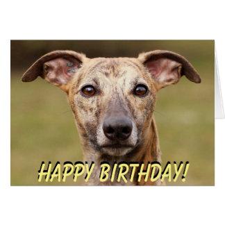 Cute whippet birthday card