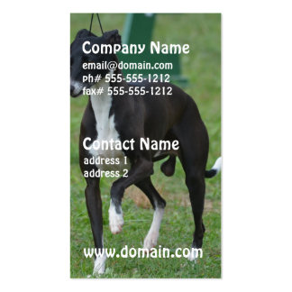 Cute Whippet Double-Sided Standard Business Cards (Pack Of 100)