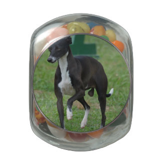 Cute Whippet Jelly Belly Candy Jar