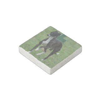 Cute Whippet Stone Magnet