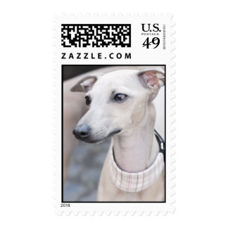 Cute Whippet Postage