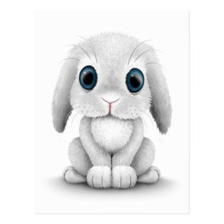 Cute White Baby Bunny Rabbit Postcard