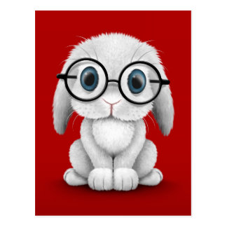 Cute White Baby Bunny Wearing Glasses on Red Postcard