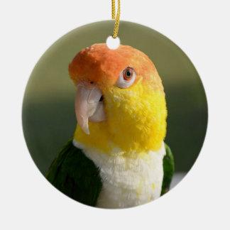 Cute White Bellied Caique Parrot Ceramic Ornament