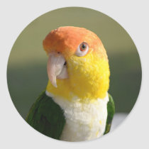 Cute White Bellied Caique Parrot Classic Round Sticker