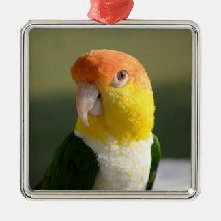 Cute White Bellied Caique Parrot Metal Ornament
