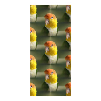 Cute White Bellied Caique Parrot Rack Card