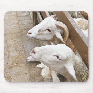 Cute white billy goats mouse pad