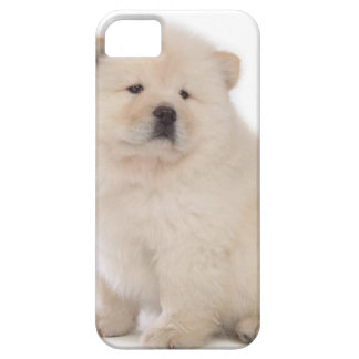 cute white chow chow puppy pup dog iPhone SE/5/5s case