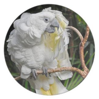 Cute white cockatiel plate