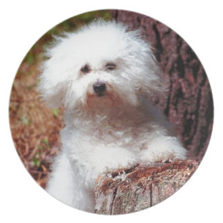 Cute White Dog Design  Plate