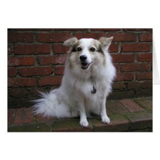 Cute White Dog On Bricks Cards