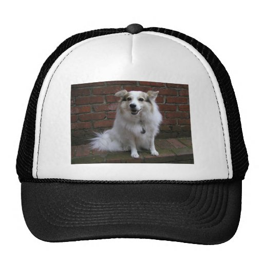 Cute White Dog On Bricks Mesh Hats