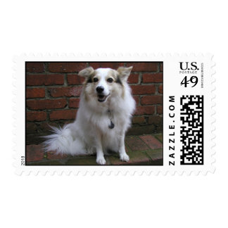 Cute White Dog On Bricks Stamp