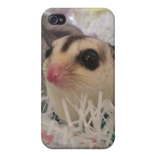 Cute White Face Sugar Glider iPhone 4/4S Covers