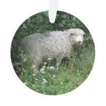 Cute White Fluffy Sheep Eating Acrylic Ornament