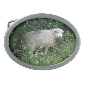 Cute White Fluffy Sheep Eating Belt Buckle