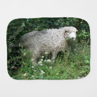 Cute White Fluffy Sheep Eating Burp Cloth
