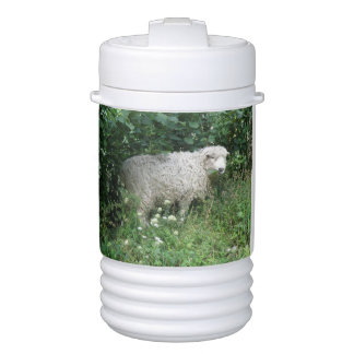Cute White Fluffy Sheep Eating Drinks Cooler