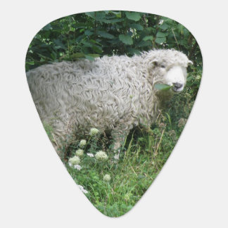 Cute White Fluffy Sheep Eating Guitar Pick